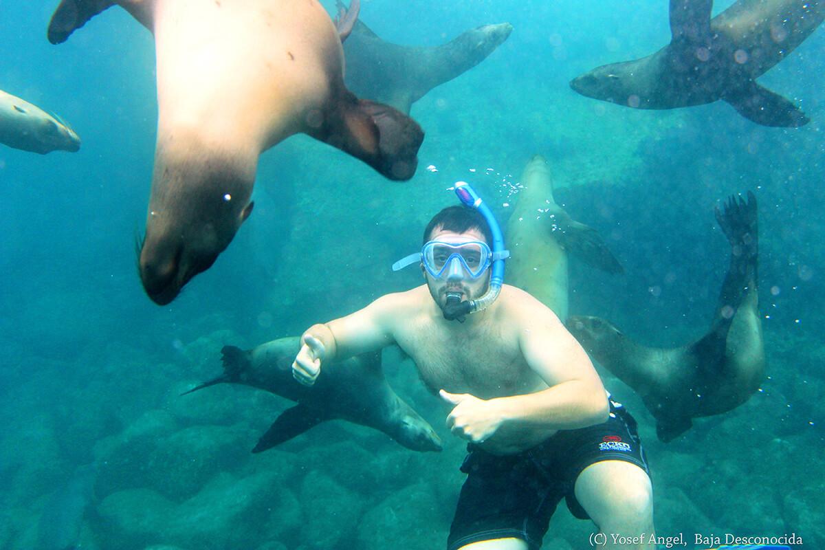SnorkelLobosMarinos